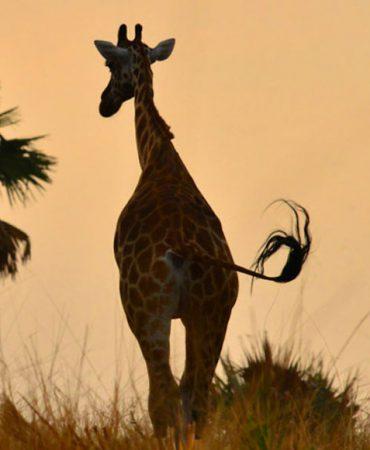 Uganda's wonder attractions